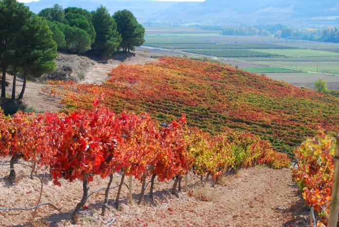 Wine ribera de duero (1)